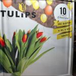 10-godini-Tulips-18
